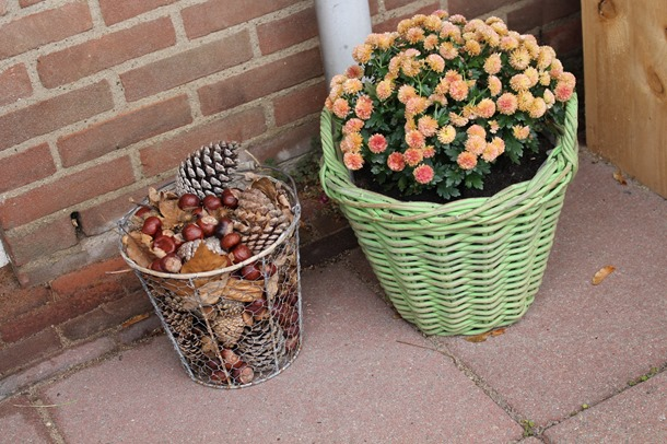 tuin, herfst, hoesje 435