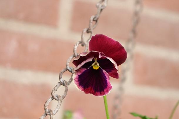 tuin, herfst, hoesje 438