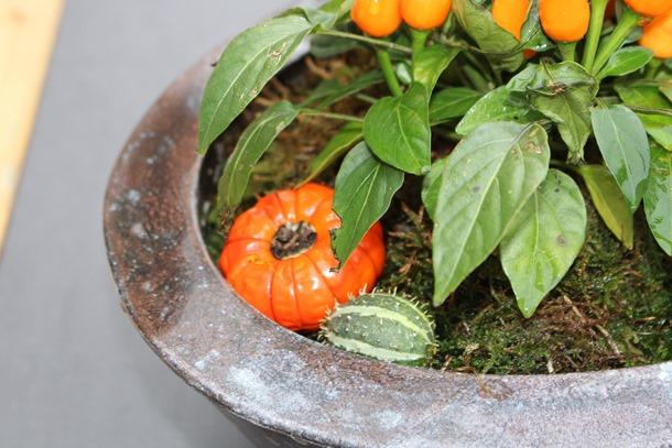 tuin, herfst, hoesje 448