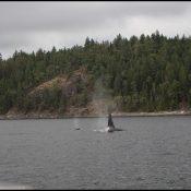 Walvis tour op Vancouver Island